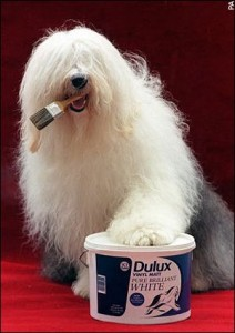 168dulux_paint_dog